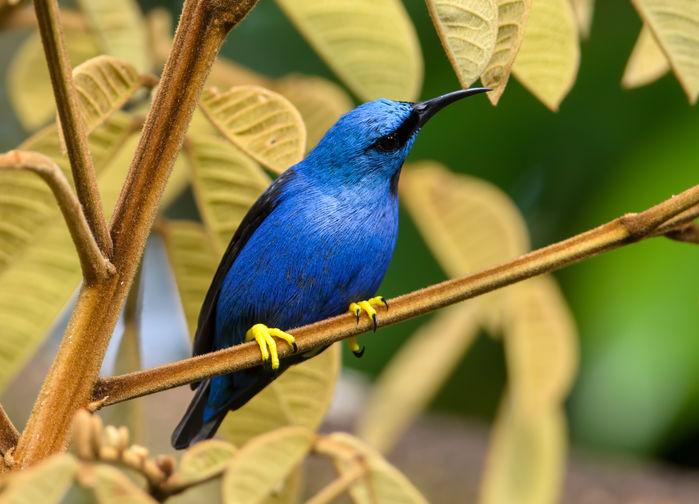 fåglar vid Sarapiqui