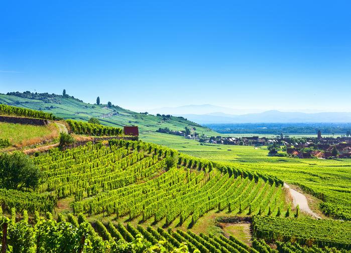Karta Champagnedistriktet Frankrike.Vinresa Och Vinvandring I Alsace Och Champagne Temaresor