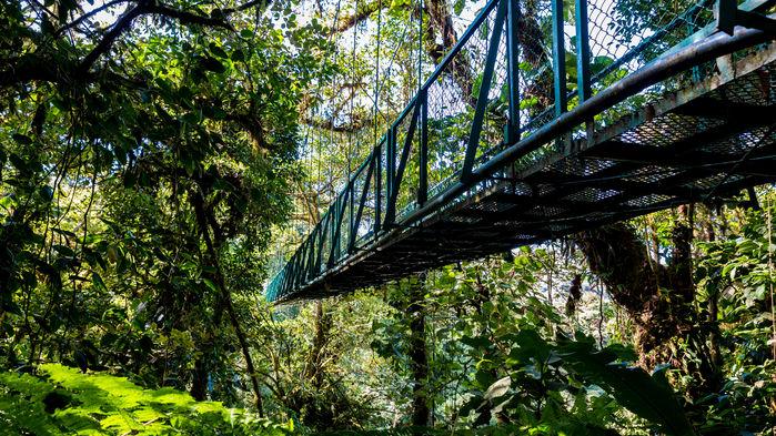 hängbroar i djungeln