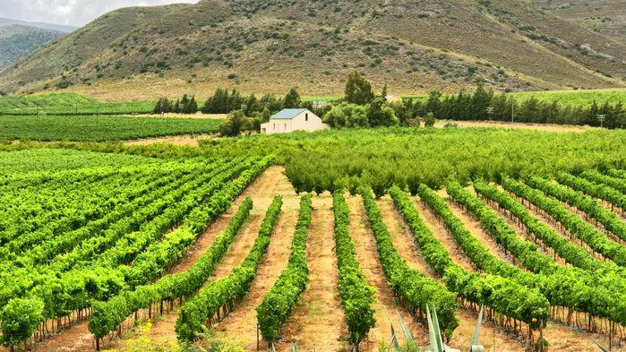 Vinodlingar i Montegu