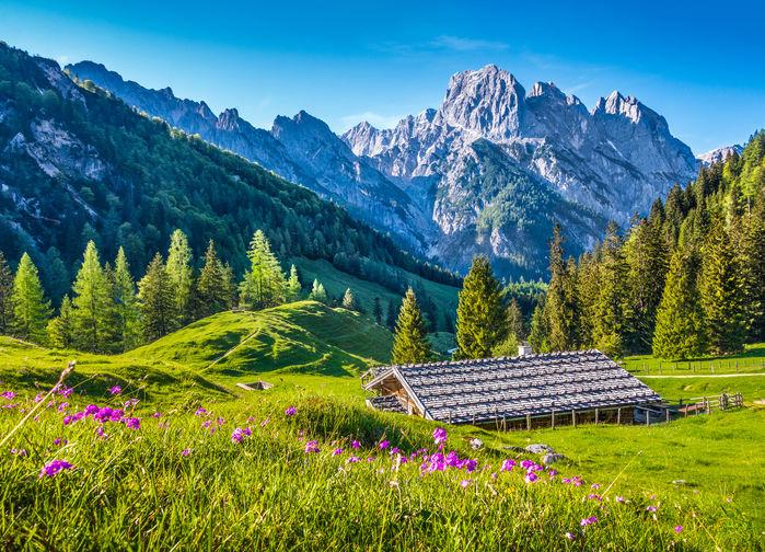 Vi vandrar på blomstrande ängar, förbi höga berg, sjöar och glaciärer i ett alpint landskap som saknar motstycke.