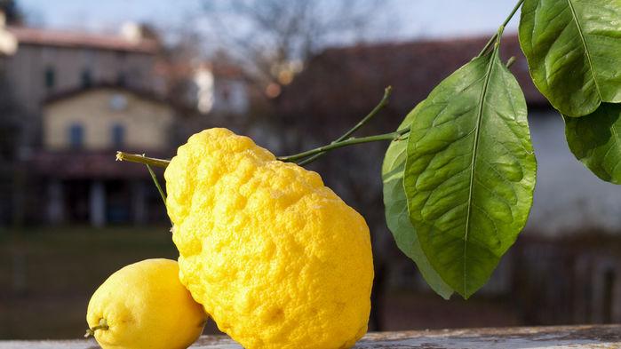 Cedar och citron i amalfi