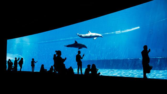 Genovas akvarium