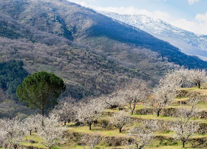 Vår i Gredos